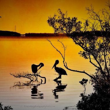 Pelican awakening