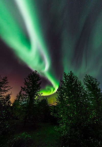 Aurora and the trees.