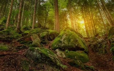 Hobbits Land