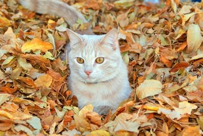 Fall Kitty