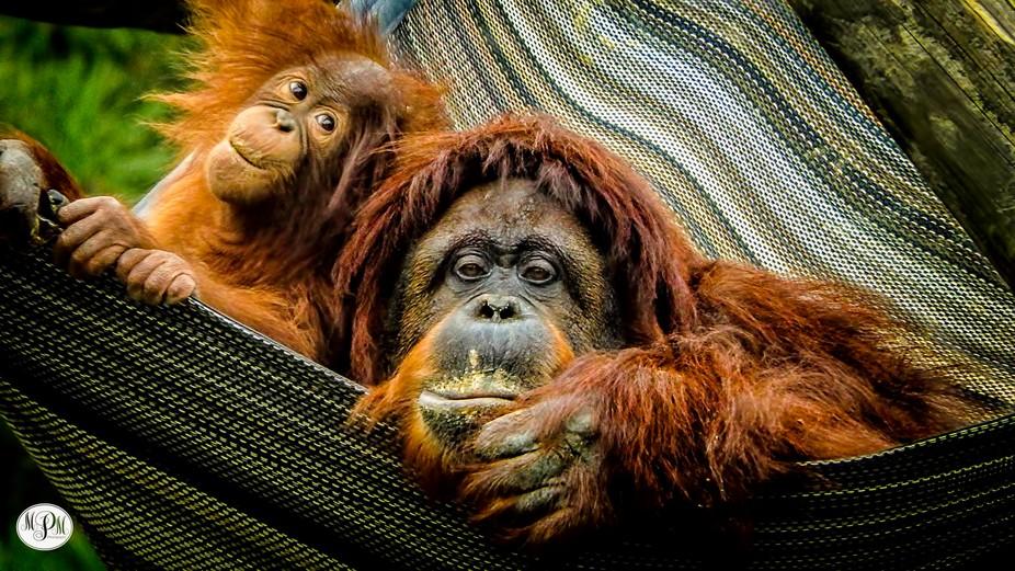 Mother & Child at the Richmond (VA) Zoo