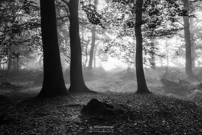 Blinding Fog Silhouettes