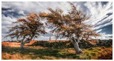 A windswept day on the North York moors