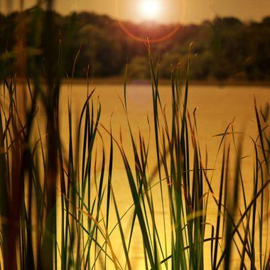 Sunset at Lake Mt. Dora amongst reeds