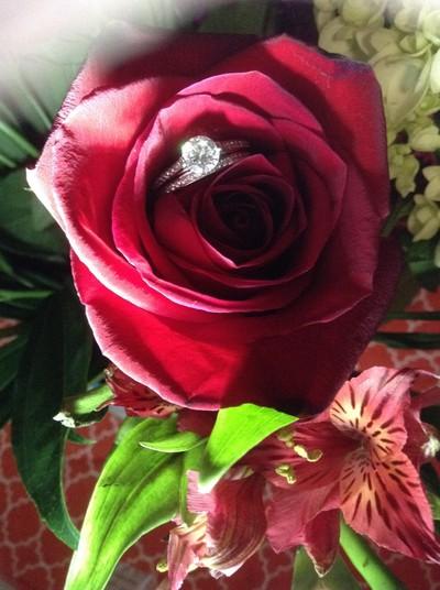 My Lover's Rose