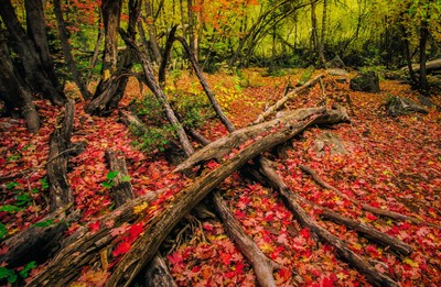 Fallen Tree in a Color Glade