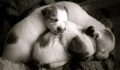 snuggle time , puppy style