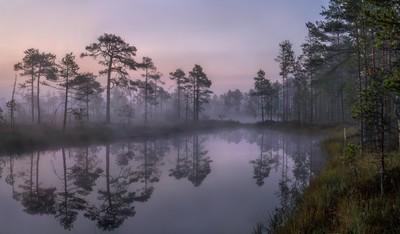 Silence spreads fog
