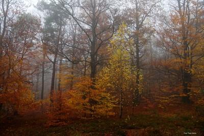 Autumn DSC00459