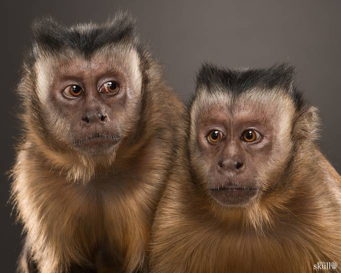 LS2_5229-Edit-Edit by LittleSkullPhotography - Monkeys And Apes Photo Contest