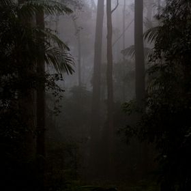 Photo taken in Springbrook national Park Gold Coast. Was very foggy as it was up high in the mountains in the clouds.
