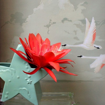 SwanStarFlower