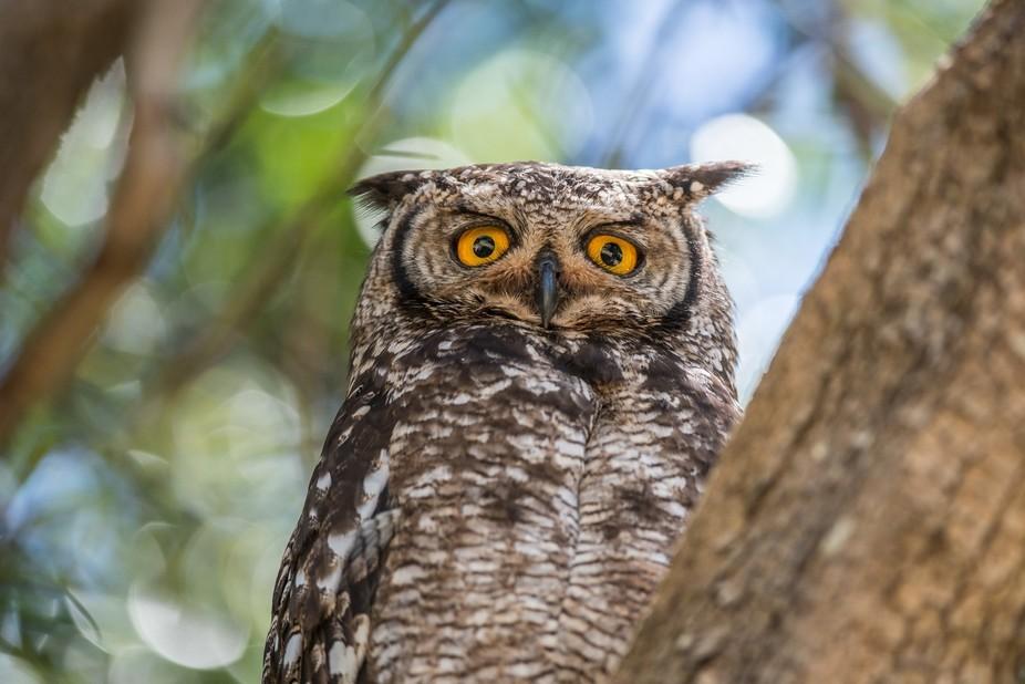 One Owl - no Pussycat!