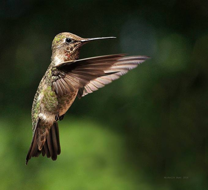 Hummingbird by k9socal - Shallow Depth Of Field Photo Contest