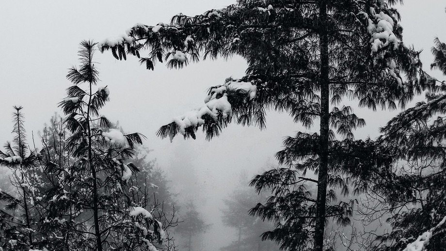 Trees in deep in jungle covered with snow.