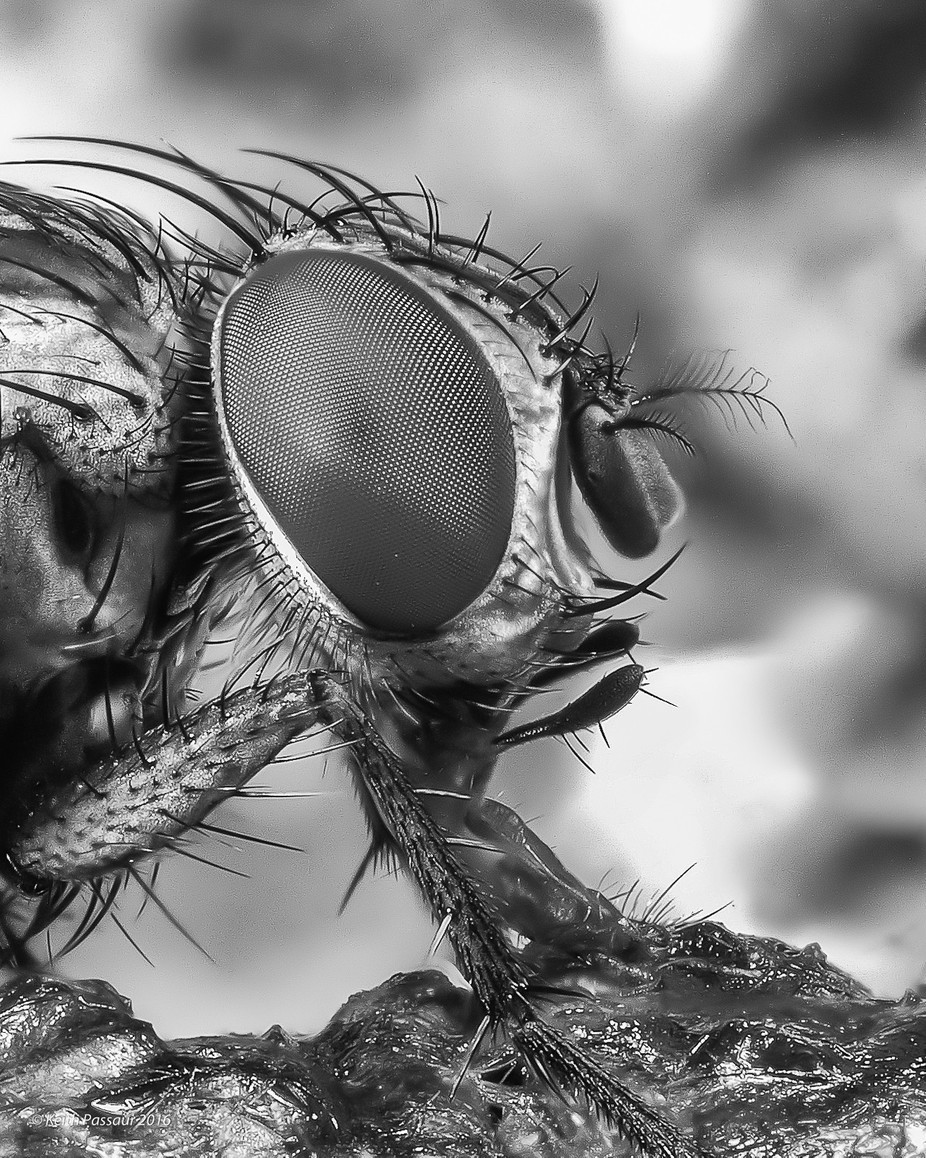 Black and White Fly by keithpassaur - A World In Black And White Photo Contest