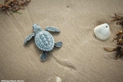 Tiny Turtle w/shell _9877