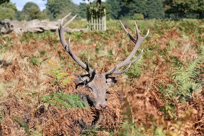 Bushy Park. UK by MariaLGeo - Can You See Me Photo Contest