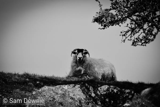 Taken near Windermere, Cumbria, England in February 2016. Originally in colour but silvered in Photoshop.
