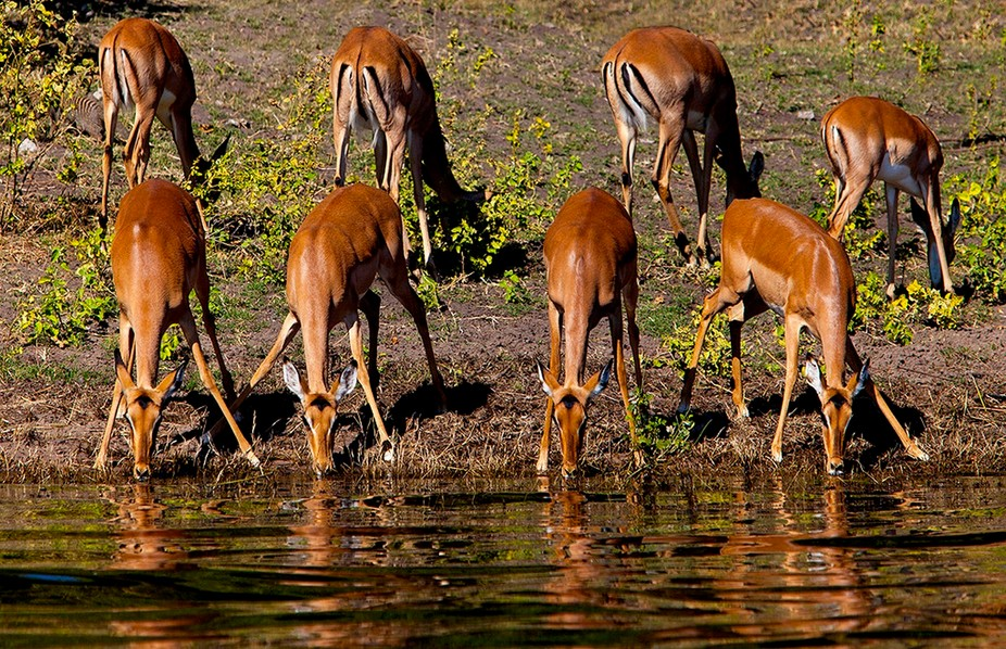 Taken at Chobe River in Botswana, Wild Life
