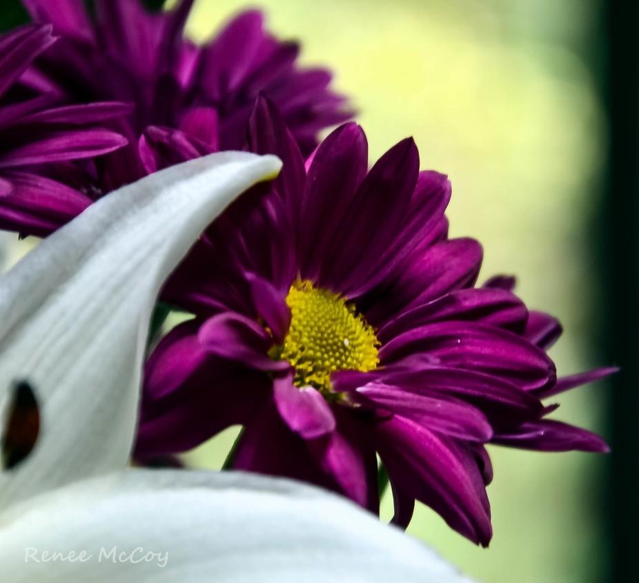 Dance in Purple