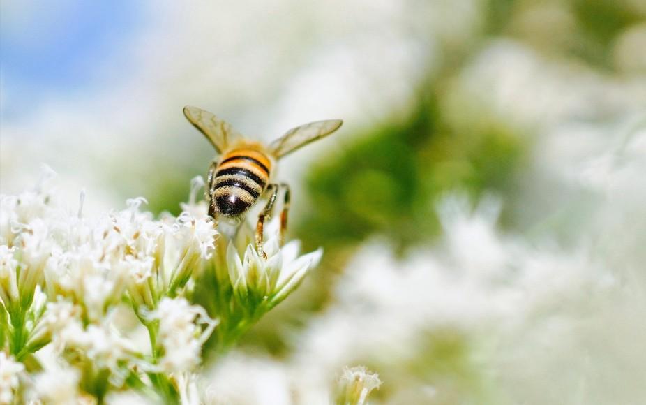 Teeny bee bouquet