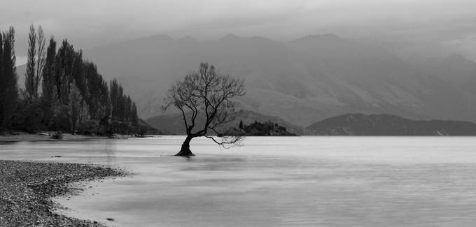 That Wanaka Tree by ikigaidesignsuk - Silhouettes Of Trees Photo Contest