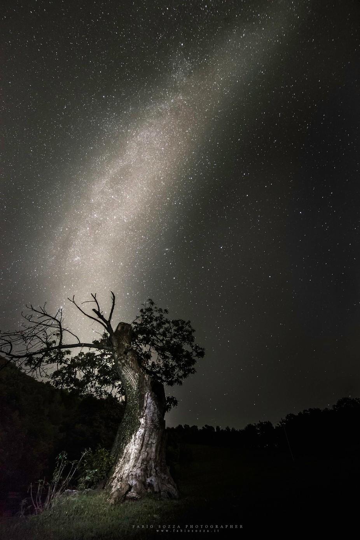 Milky Tree by fabiosozza - Night Wonders Photo Contest