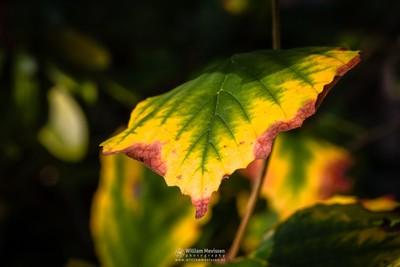 Autumn Foliage Colors