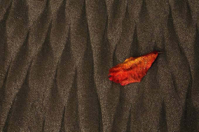 """Leaf"" by ericbennett - Show Minimalism Photo Contest"