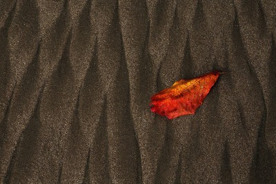 """""""Leaf"""""""