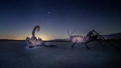 Borrego Bugs at Moonrise