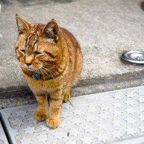 Cute little house cat seem like waiting his owner to come back from work with his sad face.