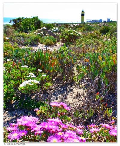 Groenrivier Lighthouse, Namaqua Park.