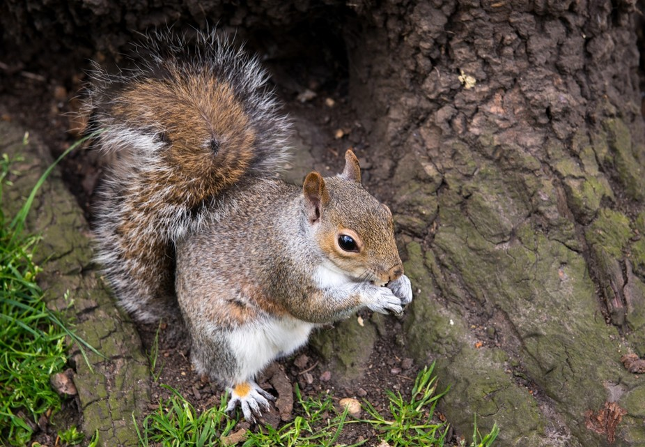 The Squirrel's Tale