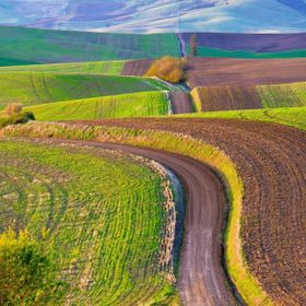 "Dirt roads connecting farm fields throughout the Palouse country of eastern Washington are sometimes called ""Primitive Roads,"" and are ..."