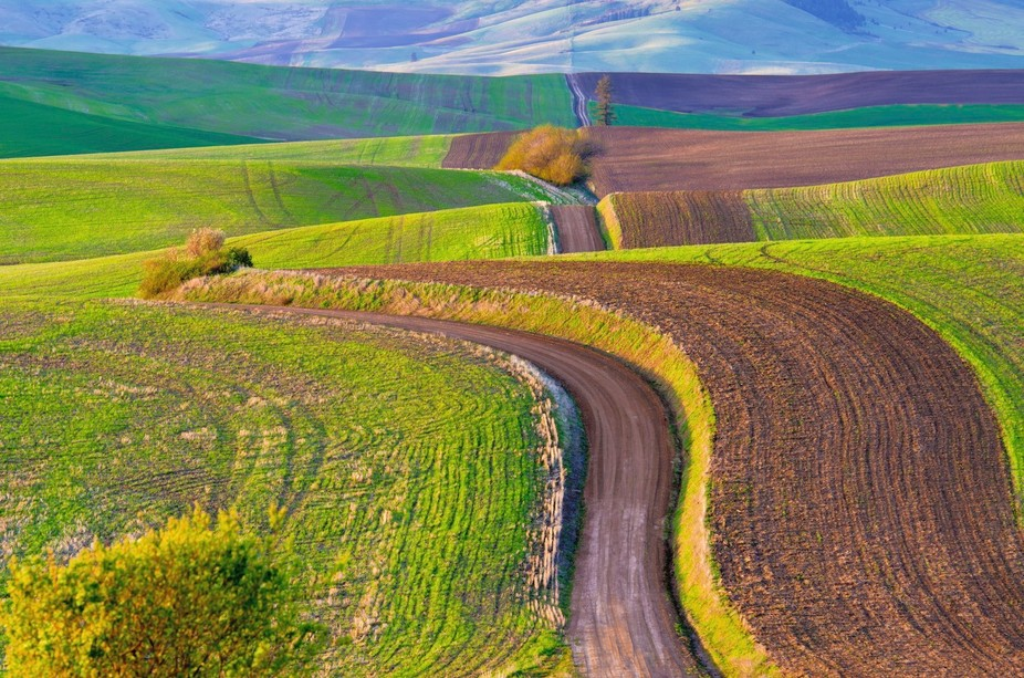 Dirt roads connecting farm fields throughout the Palouse country of eastern Washington are someti...