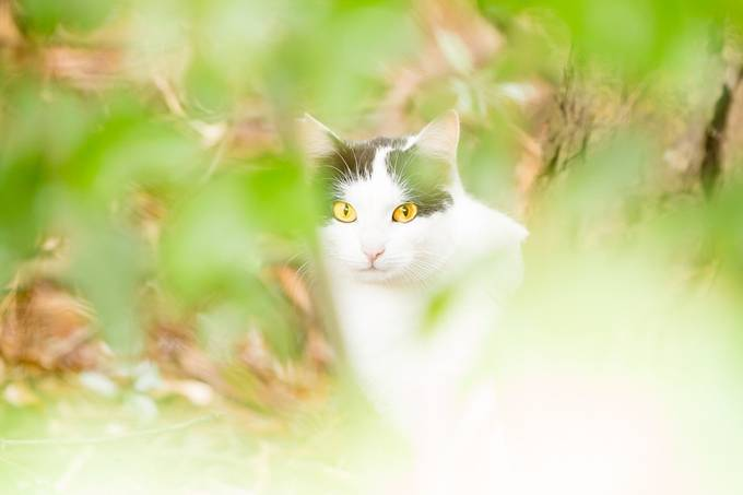 Wild by marcoitaliani - Feline Beauty Photo Contest