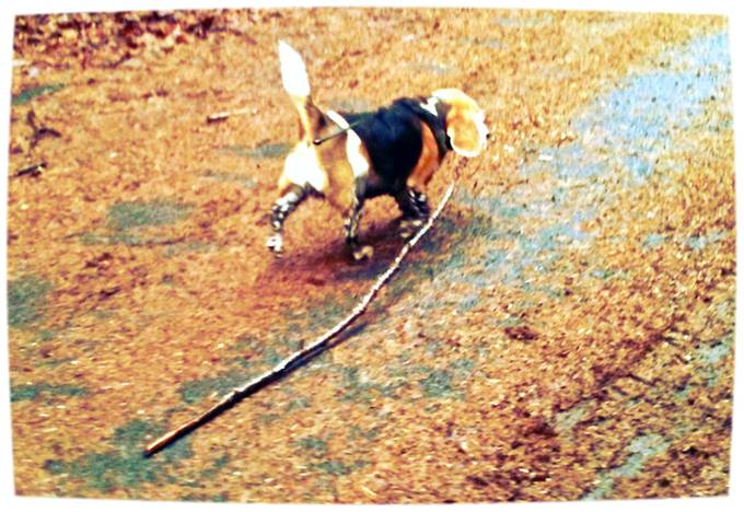 Mud Puppy and her Stick copy