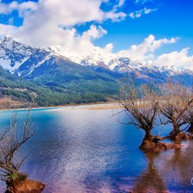 Line of trees growing out of the water's edge at Lake Wakatipu, Glenorchy, New Zealand