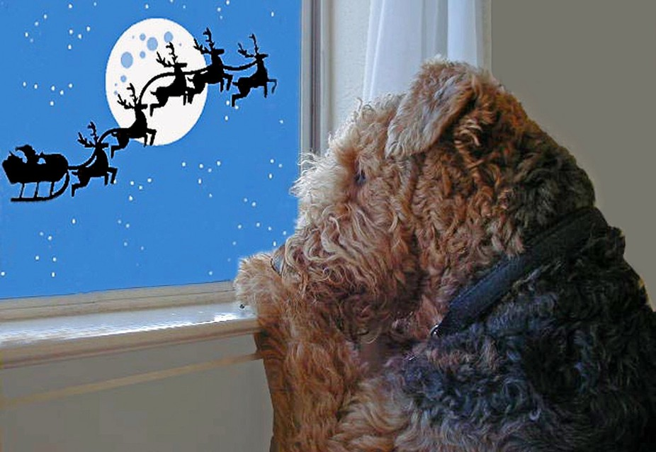 Airedale Terrier Waiting for Santa