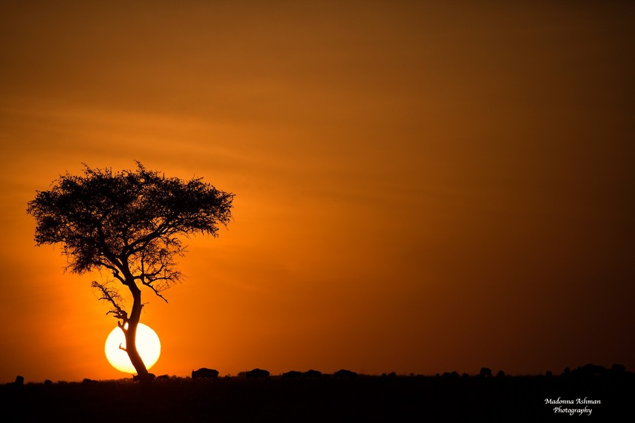 This image was taken in Masai Mara in Africa last month. The sunrise was so beautiful it took my ...