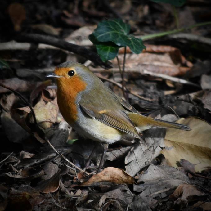 Taken this morning while dogwalking. (11-10-16) The little bird just kept posing!