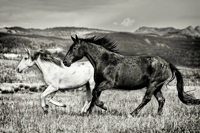 Galloping Through The Scenery In Black And White by KayBrewer - Opposites Photo Contest