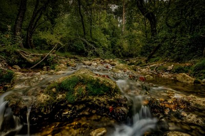 Sous-bois et ruisseau