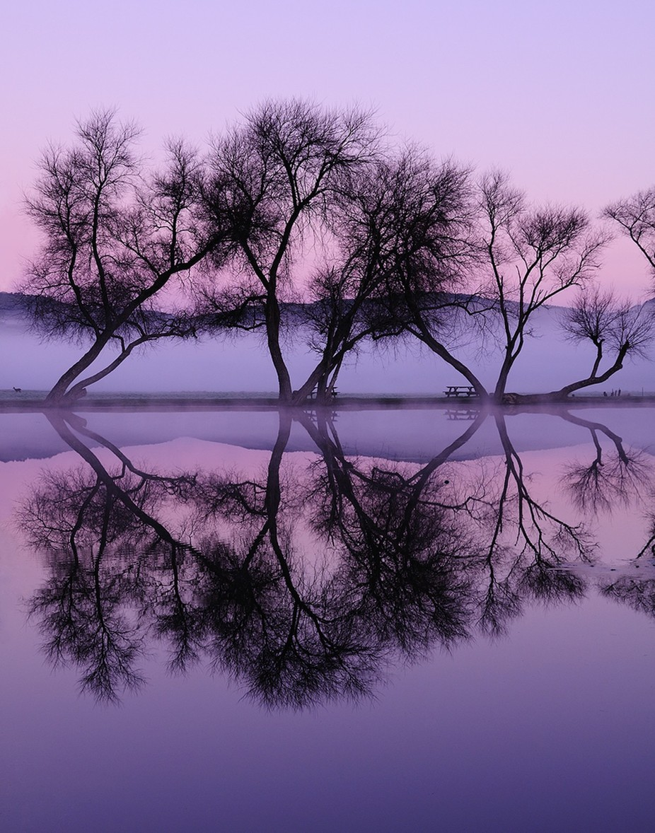 Twilight Reflections by michaelryanphoto - Silhouettes Of Trees Photo Contest