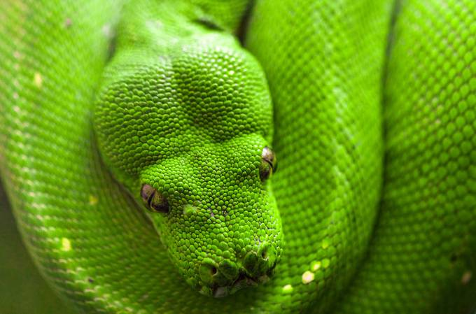 Emerald by danielprice_4060 - Snakes Photo Contest