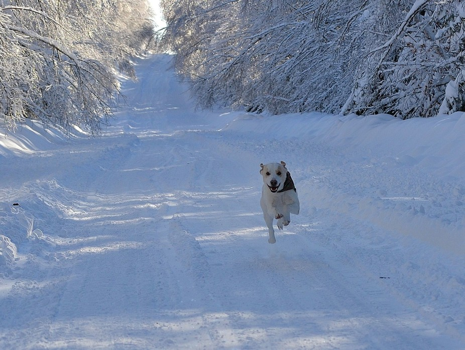 My Dog out for a run in the snow.