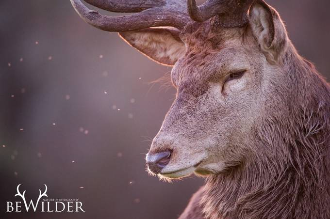 The Gentle King by GeraintRadford - Animals And Rule Of Thirds Photo Contest
