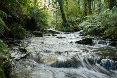St Nectan's Glen - Stream